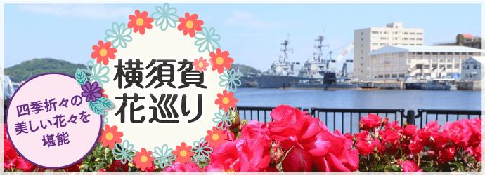 横須賀花巡り